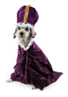 dog wearing a king costume